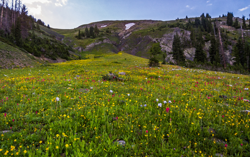 Arnica, columbine, paintbrush, and clover decorate the slopes of Braddock.